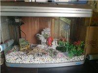 魚缸(75厘米*50厘米)