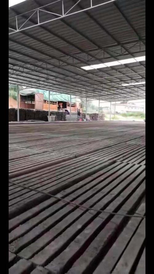 本人出售果园水泥立桩1900根,可以搭建葡萄水泥桩,百香果水泥桩架子,八月瓜水泥桩,养殖场围栏水泥杆...