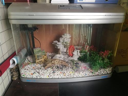 魚缸 (75\50厘米秀)