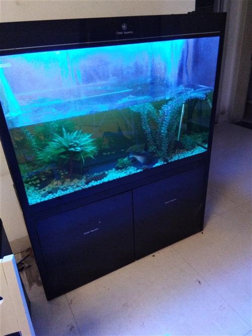 CLeair可麗愛魚缸,自循環,自帶恒溫, 1.48x1.2米,有意請電15348165424
