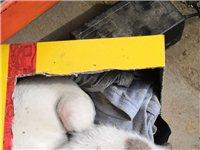 灵蹄犬格力犬15738509624