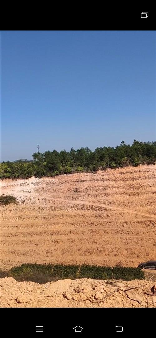 关西脐橙园林低价转让 有证设施设备齐全 80多亩 72万  13307071237