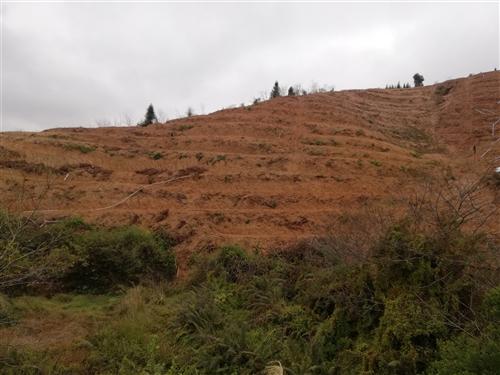 大路村水厂后面有一份果山转让,条带己开好,可种五百棵左右,水电路方便,租期还有三十一年,价格五万八,...