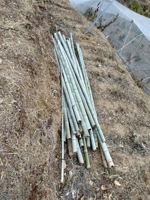 100根毛竹转让3.5米每根