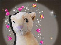迪士尼狮子王35cm 有赠品娃娃呦 吉林省延吉市