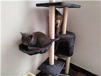 送貓糧貓架貓盆等
