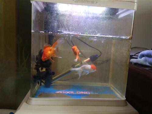 魚缸+加熱棒+六條魚+充氧棒+過濾器  四十自提  搬家處理