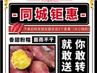 【东方在线精选】28元抢购10斤桥头地瓜再送3个蛋黄地瓜试吃原价80元