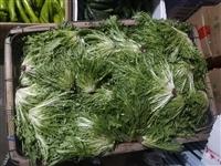 【果蔬配送】新鮮苦菊4.5元/斤,縣城內滿50元免費配送!