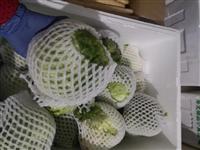 【果蔬配送】新鮮生菜球5.5元/斤,縣城內滿50元免費配送!