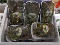 【果蔬配送】新鮮香椿12元/盒,縣城內滿50元免費配送!