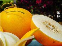 多汁的缅甸黄河蜜瓜