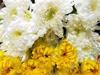 【清明特供】12.8元搶購綠居花藝館28.8元清明特供鮮花黃色/白色菊花