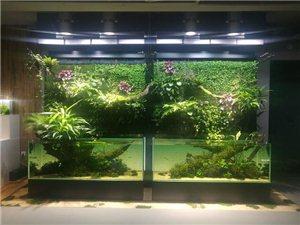 生态鱼缸#会呼吸的鱼缸