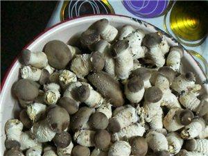 鮮嫩香菇芽