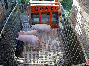 买智能养猪机,送监控摄像头。