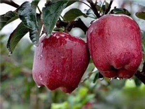 天水花牛蘋果自家產品