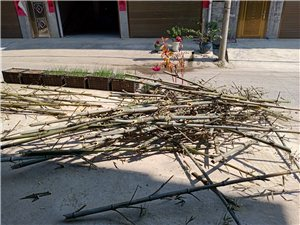 長期大量收購楠竹尖