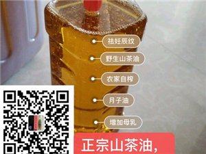 正宗自家龙廷高山茶油联系13767771519