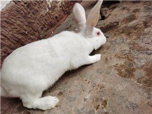 新鮮肉兔包殺送貨上門