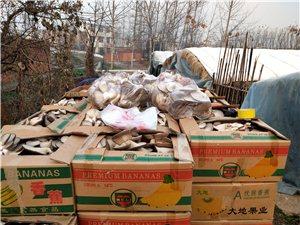 自家種的現摘新鮮蘑菇,便宜賣了,3元一斤