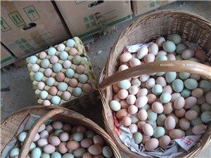 出售土鸡及土鸡蛋