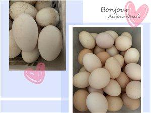 自己家养的鸡蛋,鹅蛋,纯粮食和野菜散养的,
