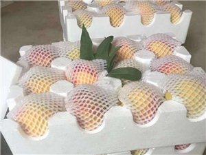 优质83黄桃