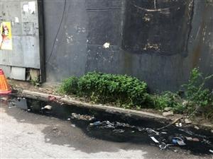 皇家幼儿园巷子里污水横流,垃圾满天飞