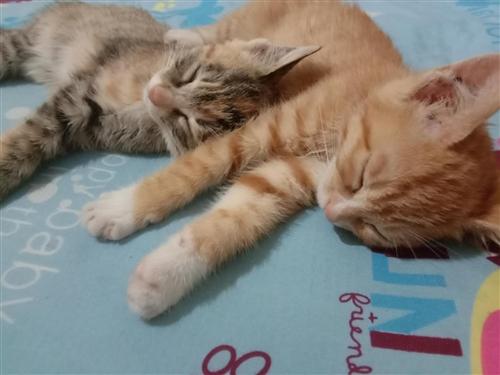 出售2只小猫仔,长得可爱,一个公猫,一个母猫!想买的另外给笼子和猫砂盆,还有剩下的猫粮,因为家里搬家...