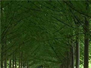 小区绿化美化
