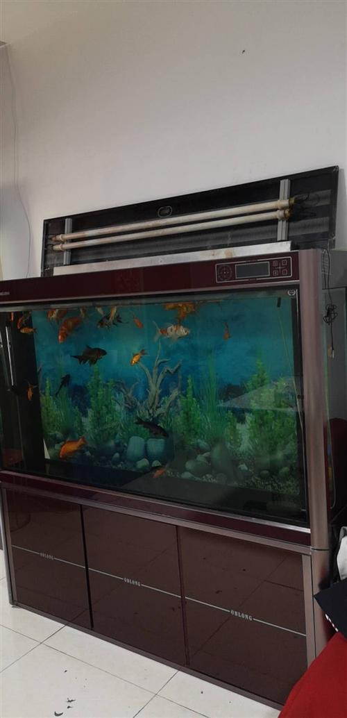 魚缸帶魚割肉甩賣。豪華大氣一體魚缸,原價8500元,現低價出售。缸帶魚3000元!