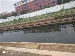 工农河成了黑水河