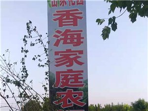 岳寨十万斤龙卷风西瓜在售