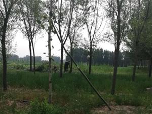 西尖大队占用个人耕地在耕地上硬化路面建议