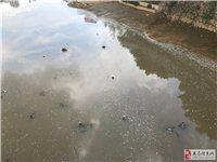 滨江大桥下面的河水,河里漂的白泡泡到底是什么