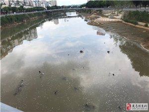 �I江大�蛳旅娴暮铀�,河里漂的白泡泡到底是什么