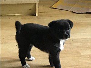 两个月小狗 自己家的狗生的