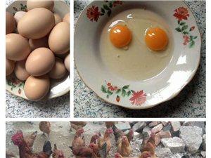出售農村散養無公害家雞蛋