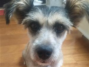 谁家的狗狗丢了欢迎认领,有喜欢的也可以领养