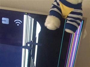 Tcl曲屏65英寸智能电视。右上角有磕碰痕迹。不影响节目播放。