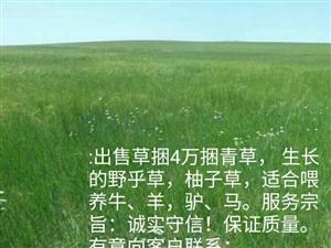 出售4萬捆青草