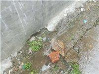 水管破了,师范家属区大门口的水管爆了