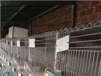 大量出售兔籠,有意者來電咨詢,18330942333,馬先生