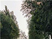 危(wei)險的路(lu)邊樹和電線(xian)桿