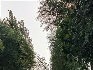 危险的路边树和电线杆
