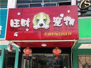 十年老字号宠物店各种犬猫有售,包健康品质