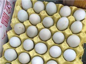 3毛一个绿壳鸡蛋,出售可以变变蛋的鸡蛋