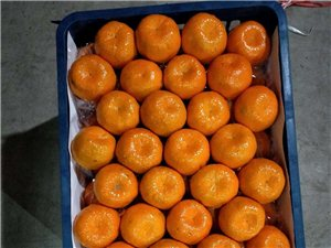 滨州新蒲城水果批发市场章氏蜜桔