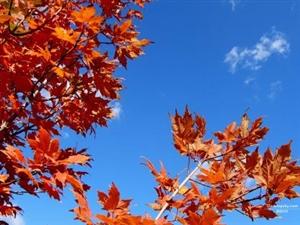 ���o秋天的�